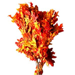 Transparent Oak Leaves   Younger and Son   Floral Wholesaler and Supplies