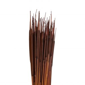 Dark Pencil Cattails   Younger and Son   Floral Wholesaler and Supplies