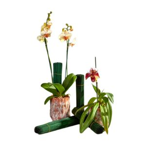 Wooden Plant Stakes   Younger and Son   Floral Wholesaler and Supplies