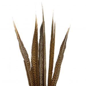Golden Pheasant Feathers   Younger and Son   Floral Wholesaler and Supplies