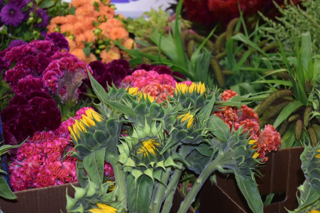 Wholesale Flowers | Younger and Son | Florist | Floral Supplies | Flower Distributor | Flower Supplies | Floral Supplier | Lansdale | Montgomery County| Philadelphia | Pennsylvania